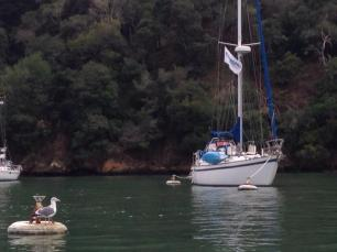 Sonho on the mooring balls at Angel Island. Photo by HBS.